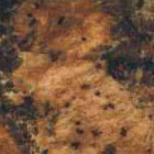 Baltic Brown granite Surface : Click to enlarge